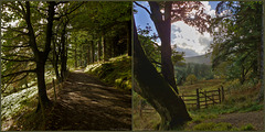 Whinlatter Forest (HFF everyone)