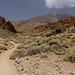 Canary Islands - Tenerife - Pico del Teide