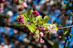Fleurs sur la branche