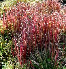 R like RED herbs