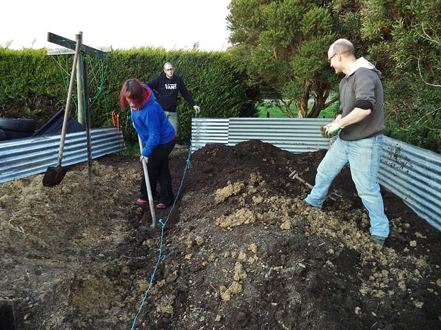 blueberry patch: work in progress