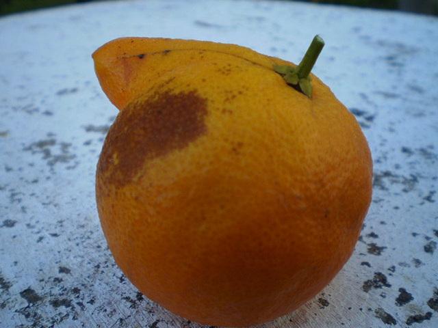 Nosy orange.