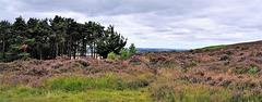 Scotland St. Cuthbert's Way (PiP)