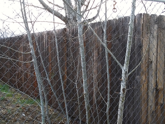 Fences with mystery hook