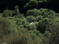 Yurt In The Woods (2058)