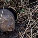 Vole in a Hole 06