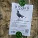 missing nightingale