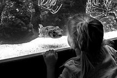 La petite fille et le poisson