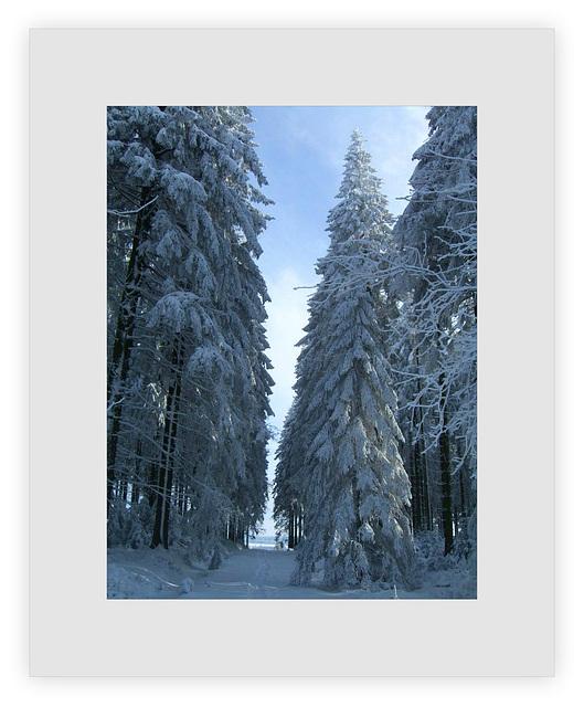 ...im Winterwald...