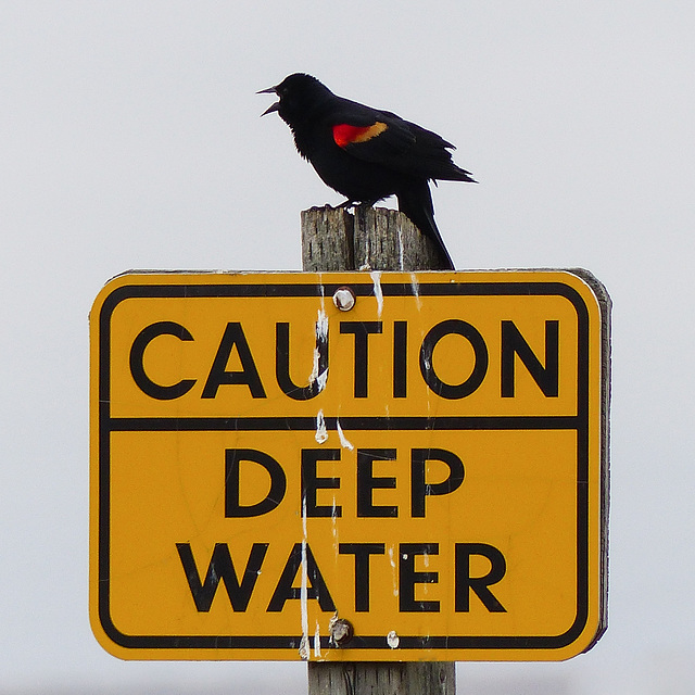 Caution - deep water