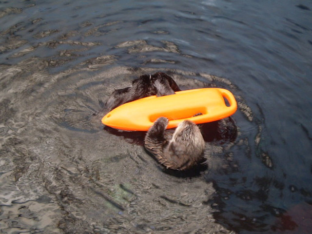 Otter - time to play.