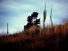 Dusk on a hill