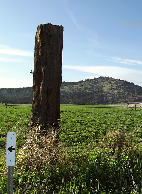 Tree trunk fence post...