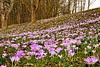 Der Frühling 2015 ist da - Spring 2015 has arrived - Please enlarge!