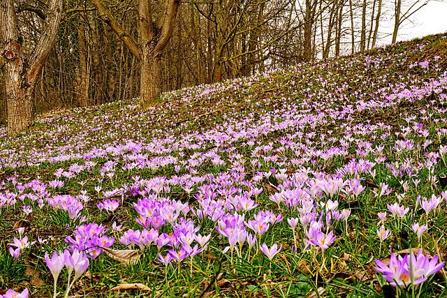Der Frühling 2015 ist da - Spring 2015 has arrived