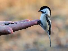 A birder's first time