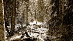 Trail to Bridge Creek falls.