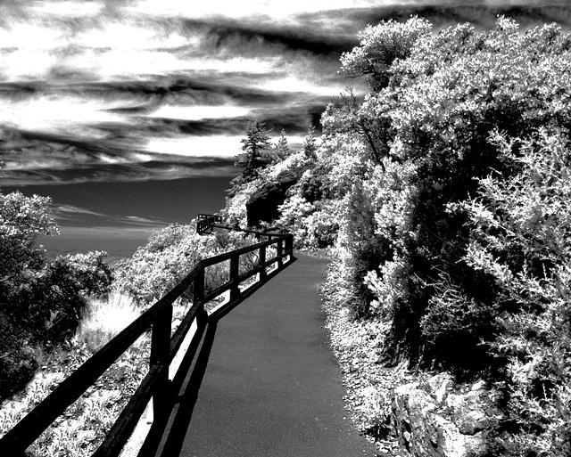 Ascendant Pathway