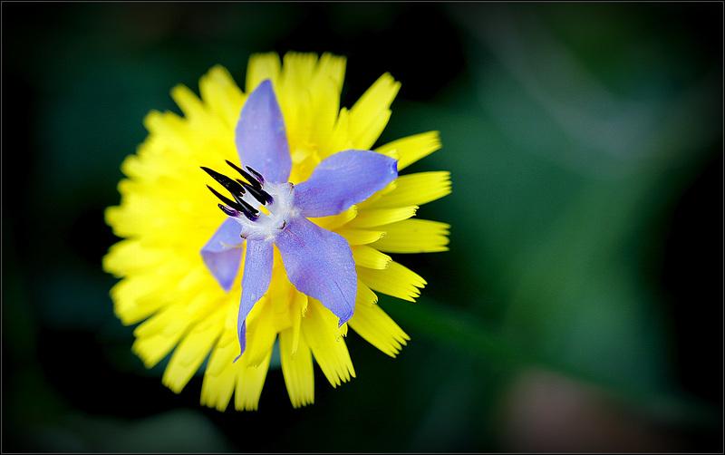 Une fleur par jour.... - Page 11 47518872.310f71b4.800
