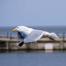 Seagull May set (6)