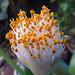 Flores emergentes