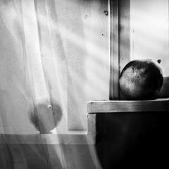 mangos on window sill