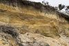 Benacre Cliffs - Westleton Formation