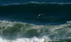 Swooping between waves