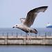 Seagull May set (12)