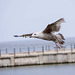 Seagull May set (13)