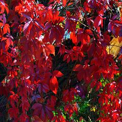 HFF - Guirlandes automnales  / Autumn garlands