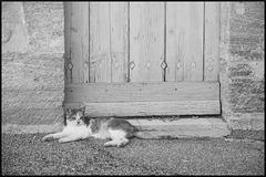 Jeune chatte et vieille porte