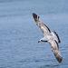 Seagull May set (16)