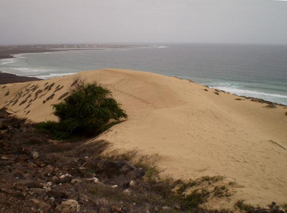 Dune on volcanic soil.