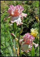 Pink Confetti (2)
