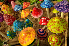 Enchanted Mushrooms