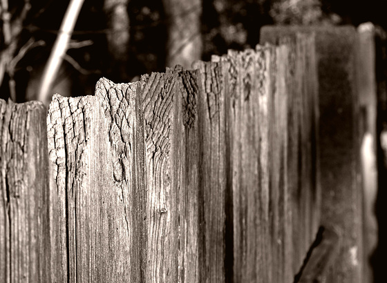 HFF!   a fence is a fence is a fence.....