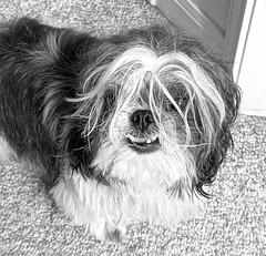 Soggy doggy after bath