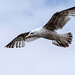 Seagull May set (20)