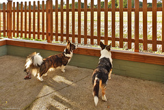 The boss built a new fence.....  (HFF everyone)