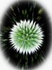 """Floral """"Big Bang"""""""
