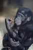 Chimba hat ein Baby! :-D (Wilhelma)