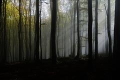 Herbsterinnerungen - Autumn memories