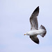 Seagull May set (23)