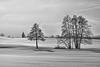 Schlier im aufziehenden Nebel in black and white