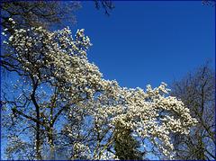 Bleu, bleu le ciel du Charolais !