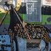 Athènes décembre 2017 photos de rue 020