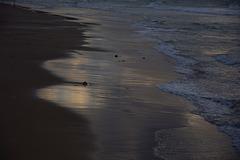 SAND  VS  SEA