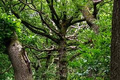 Dead tree, living tree, surviving tree