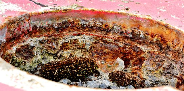 Capstan. Rusty details 2